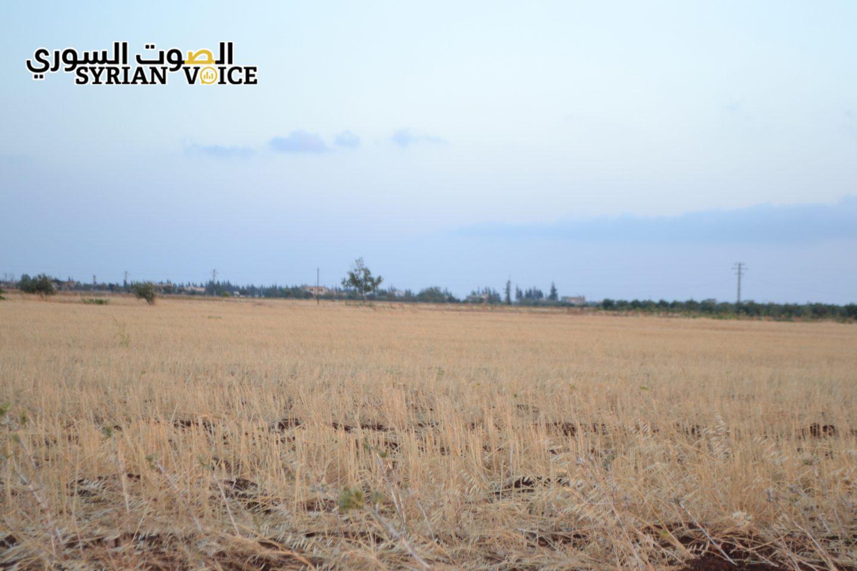 """حمص: """"الخبز"""" مفقود في موسم حصاد القمح!!"""