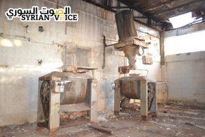 قمح حمص2